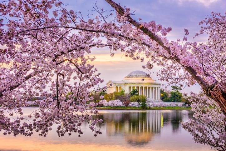 Washington DC, USA at the Jefferson Memorial and Tidal Basin during spring season.