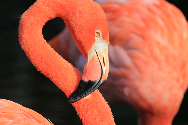 Close up image with flamingo - Orlando, Florida